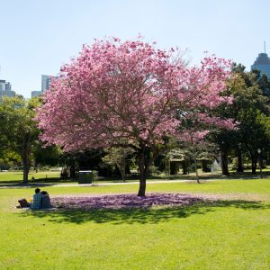 A nature lover's guide to Brisbane 2017